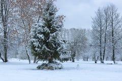 Nieve del invierno en PARQUE del árbol Fotografía de archivo libre de regalías