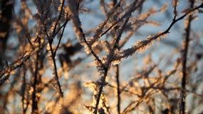 Nieve del invierno en rama imagen de archivo libre de regalías
