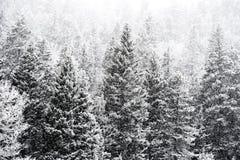 Nieve del invierno que cae en bosque del Estado del san Isabel Foto de archivo