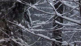 Nieve del invierno que cae pesadamente en árboles y fondo desnudos del bosque almacen de video