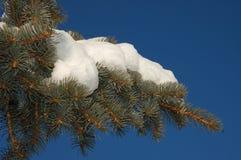 Nieve del invierno y cielos azules Imagen de archivo libre de regalías