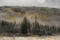 Nieve del otoño Imágenes de archivo libres de regalías