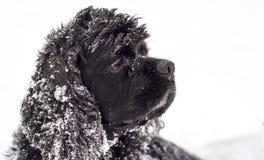 Nieve del perro Fotos de archivo libres de regalías