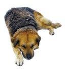 Nieve del perro el dormir Foto de archivo libre de regalías