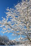 Nieve e hielo en el árbol del invierno, Georgia imagenes de archivo
