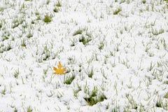 Nieve e hierba imagen de archivo