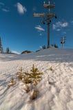 Nieve eléctrica del árbol de pino de poste Fotografía de archivo libre de regalías
