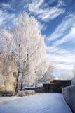 Nieve en árboles foto de archivo libre de regalías