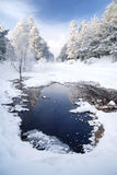 Nieve en árboles foto de archivo