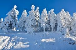 Nieve en árboles en la mucha altitud en la montaña, paisaje del invierno Imagen de archivo libre de regalías