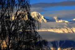 Nieve en abedul con nieve en las montan@as detrás en la salida del sol Imagenes de archivo