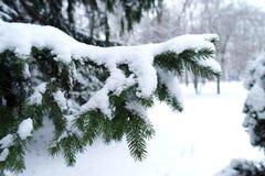 Nieve en agujas del pino Fotografía de archivo libre de regalías