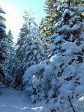 Nieve en bosque imagen de archivo