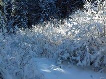 Nieve en bosque fotos de archivo