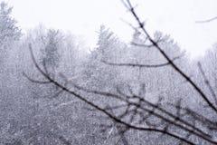 Nieve en bosque foto de archivo libre de regalías