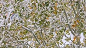 Nieve en el árbol almacen de metraje de vídeo