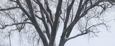 Nieve en el árbol Foto de archivo libre de regalías