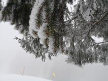 Nieve en el árbol de la aguja en la montaña Imagen de archivo