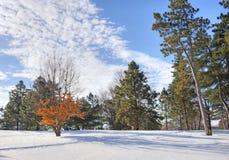 Nieve en el bosque Fotografía de archivo