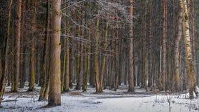 Nieve en el bosque almacen de metraje de vídeo
