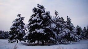 Nieve en el bosque de Europa fotografía de archivo