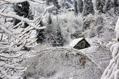 Nieve en el bosque de la montaña fotografía de archivo libre de regalías
