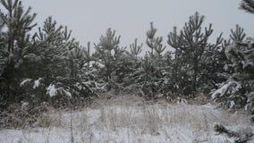 Nieve en el bosque, vídeo del invierno de la nieve que cae almacen de metraje de vídeo