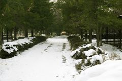 Nieve en el camino en el parque Fotografía de archivo