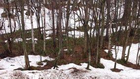 Nieve en el Forrest Imágenes de archivo libres de regalías