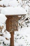 Nieve en el hotel del insecto con las abejas y los wesps salvajes Imagen de archivo