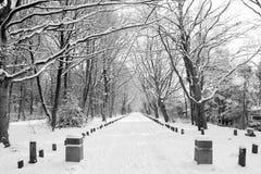 Nieve en el parque de la ciudad Groninga imagen de archivo libre de regalías