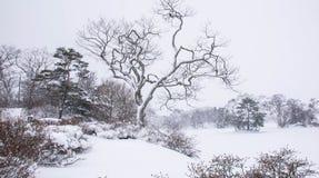 Nieve en el parque de Onuma, fondo de la nieve Foto de archivo