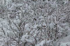 Nieve en el valle Cachemira Foto de archivo