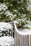 Nieve en Fency por los árboles de hoja perenne Fotografía de archivo