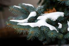 Nieve en la ramificación Foto de archivo libre de regalías