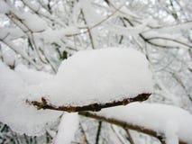 Nieve en la ramificación Imágenes de archivo libres de regalías