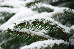 Nieve en la ramificación del abeto Imagenes de archivo