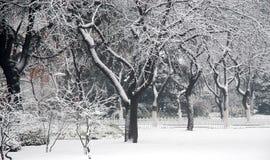 Nieve en la universidad de fudan fotos de archivo libres de regalías