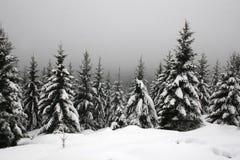 Nieve en las montañas de Harz Imagen de archivo