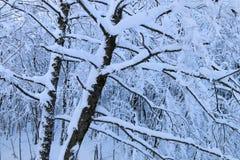 Nieve en las ramas Fotos de archivo