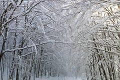 Nieve en las ramas Fotos de archivo libres de regalías