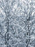 Nieve en las ramificaciones Foto de archivo libre de regalías