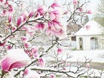 Nieve en Liriodendron imágenes de archivo libres de regalías