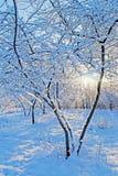 Nieve en los árboles. Imagen de archivo libre de regalías