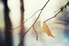 Nieve en los árboles en bosque del invierno Imagen de archivo