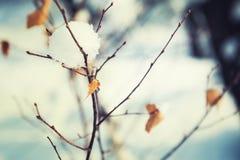 Nieve en los árboles en bosque del invierno Fotos de archivo libres de regalías