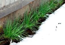 Nieve en mayo Fotografía de archivo