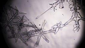 Nieve en microscopio almacen de video