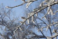 Nieve en rama de árbol en día de invierno escarchado soleado en el cielo azul Foto de archivo