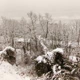Nieve en ramas Fotos de archivo libres de regalías